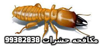 مبيد حشري للنمل في الكويت 99382838