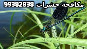 المبيدات الحشرية بالكويت 99382838