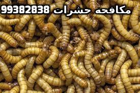 التخلص من الحشرات المنزلية في الكويت 99382838