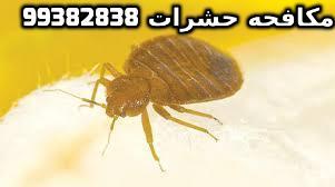 اقوى طريقة لمكافحة الحشرات بالكويت 99382838
