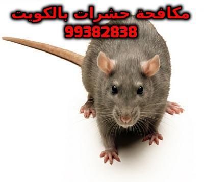 مكافحة جرذ المجاري بالكويت 99382838