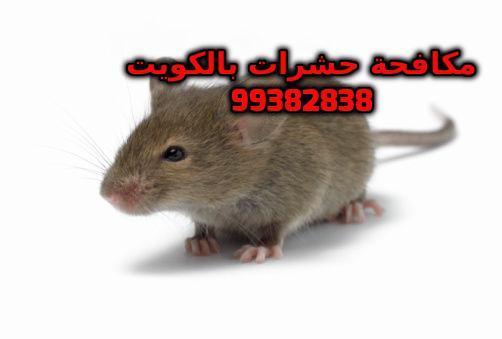 صنع سم للجرذان في الكويت 99382838