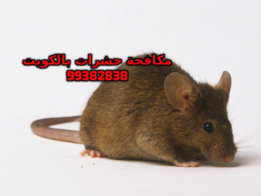 مكافحة الجرذان في الكويت 99382838