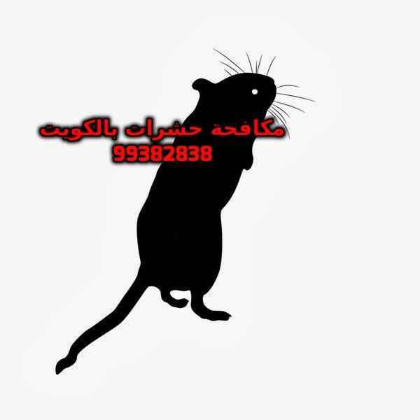 الفرق بين الجرذان والفئران شركة بست كنترول بالكويت 99382838