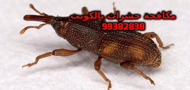 مكافحة السوس في الكويت 99382838