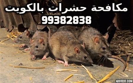 سبب وجود الفئران في البيت بالكويت 99382838