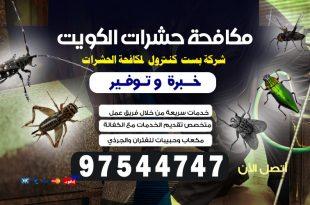 اقوى طريقة لمكافحة الحشرات بالكويت