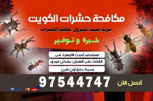 حشرات المنزل الطائره بالكويت