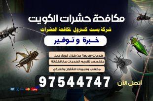 حشرات البق في الكويت