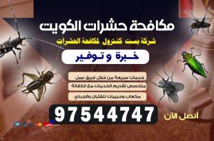 كيف أقضي على الحشرات في البيت بالكويت